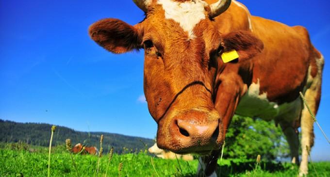 Ayudas para el sector lácteo de la provincia