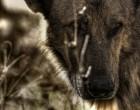 El proyecto 'FANEGA' pretende mejorar la biodiversidad