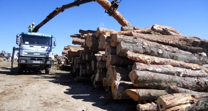Segovia, a la cabeza nacional de las subastas de madera