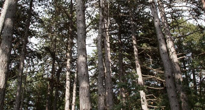 Ayudas a la reforestación