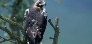 Nueva temporada de visitas a la 'Casa del Águila Imperial' en Pedraza