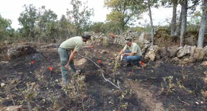 """Los Agentes Medioambientales consideran que a la Jefa de incendios de Segovia el cargo """"quizá le queda demasiado grande"""""""