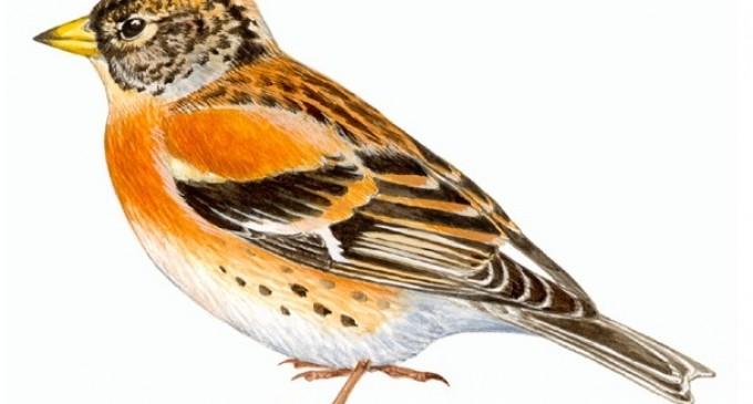 Excursión ornitológica por el Soto de Revenga