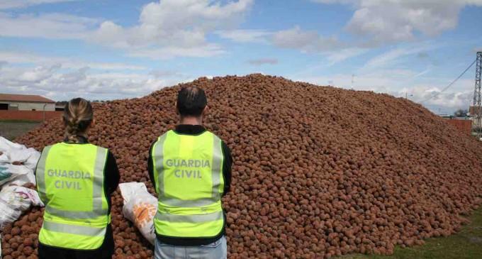 Localizados en Villaverde de Íscar 190.000 kilos de piñas presuntamente sustraídas