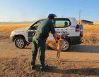 Un vecino de Torrecaballeros, acusado de suplantar a un veterinario para firmar pasaportes sanitarios